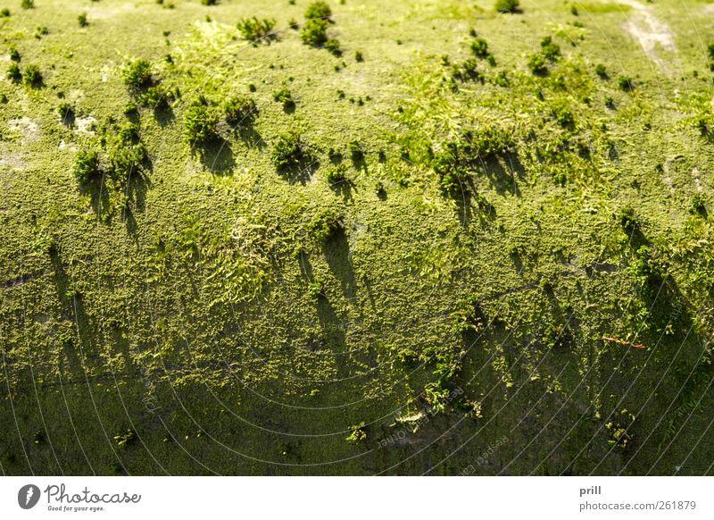 landscape imagination Natur grün Baum Pflanze Landschaft oben klein Hintergrundbild außergewöhnlich Wachstum weich Kurve Moos Botanik Baumrinde Biegung