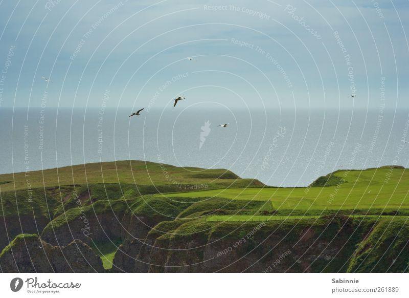 Grüner und grüner Umwelt Natur Landschaft Urelemente Klima Schönes Wetter Gras Hügel Felsen Küste Nordsee Meer Klippe Aberdeen Schottland frei wild blau braun
