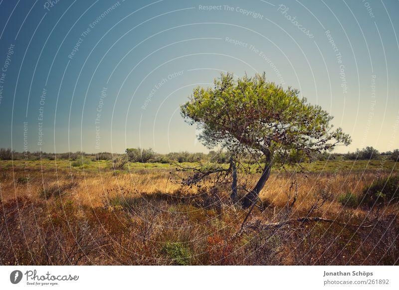 Der Baum auf der anderen Seite des Weges (hinter dem Zaun) Natur grün Ferien & Urlaub & Reisen Pflanze Sommer Ferne Umwelt Landschaft Freiheit Wärme braun