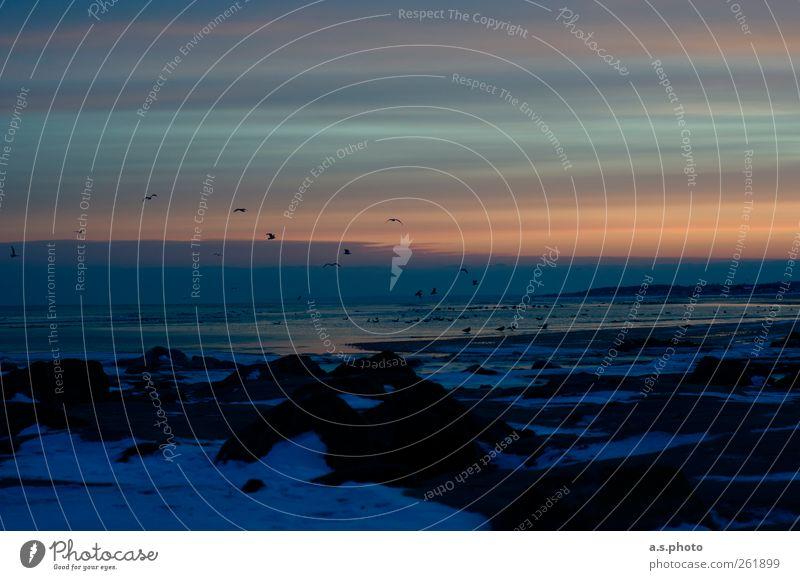der neue Tag Natur Landschaft Erde Wasser Himmel Wolken Horizont Sonne Sonnenaufgang Sonnenuntergang Winter Eis Frost Strand Hirtsals Dänemark Hafenstadt