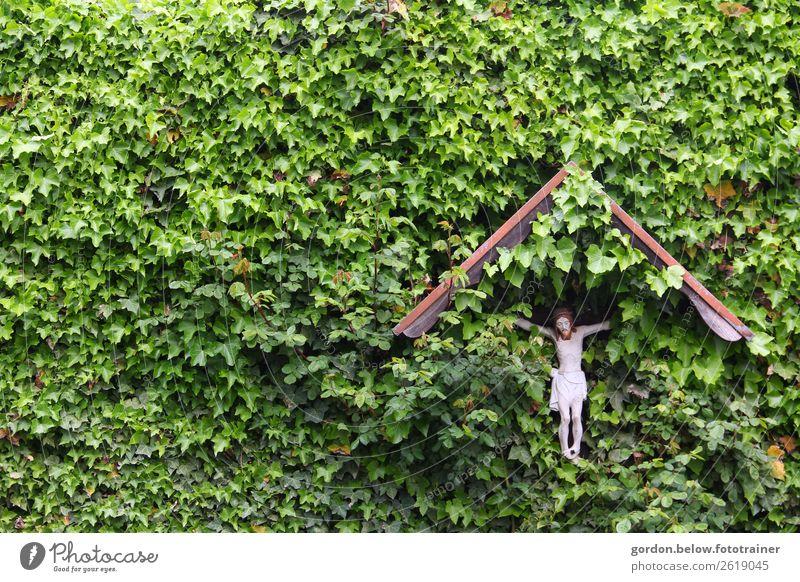 Glaube und Natur Pflanze blau grün weiß Leben Liebe Glück braun grau Stimmung Zufriedenheit träumen Kraft Hoffnung Denkmal