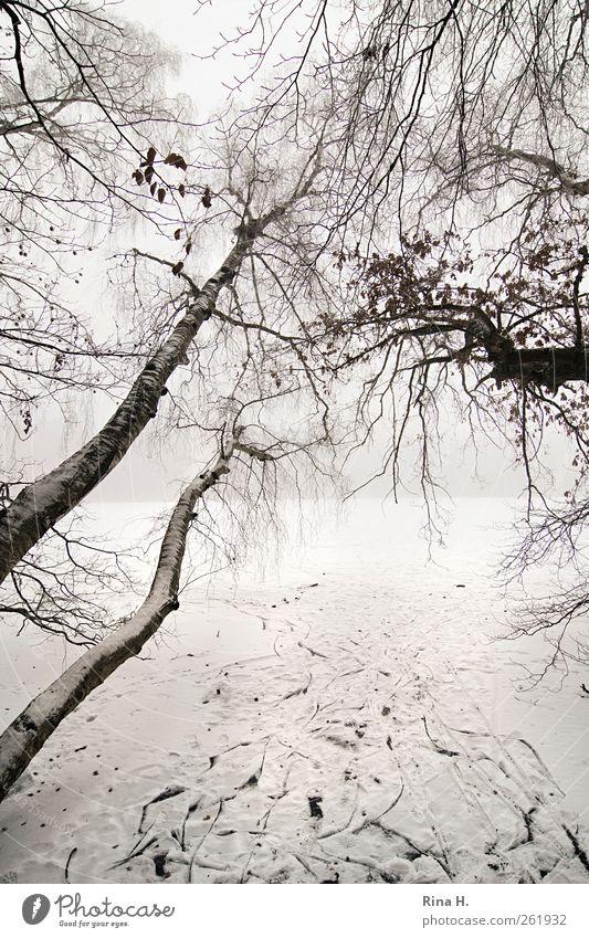 Richtungswechsel Winter schlechtes Wetter Nebel Eis Frost Schnee Baum Seeufer Wachstum hell Neigung Birke Spuren Gedeckte Farben Außenaufnahme Menschenleer