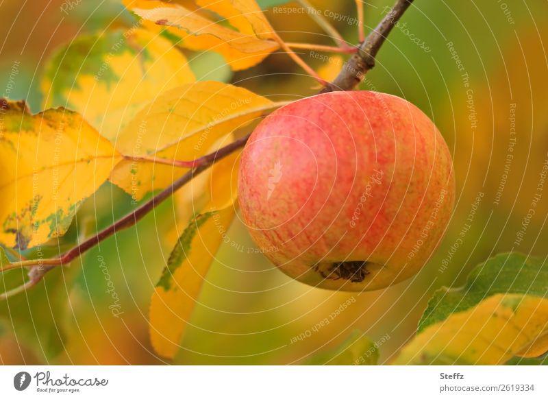 Ein Apfel am Tag II Lebensmittel Frucht Ernährung Bioprodukte Vegetarische Ernährung Diät Vegane Ernährung Gesunde Ernährung Natur Herbst Zweig Apfelbaumblatt