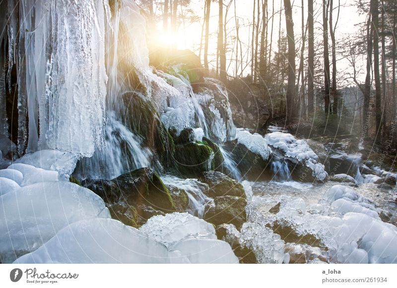 F.R.O.S.T. Natur Wasser Baum Winter Wald Landschaft kalt Eis Felsen Klima Frost Schönes Wetter Wasserfall fließen Minusgrade