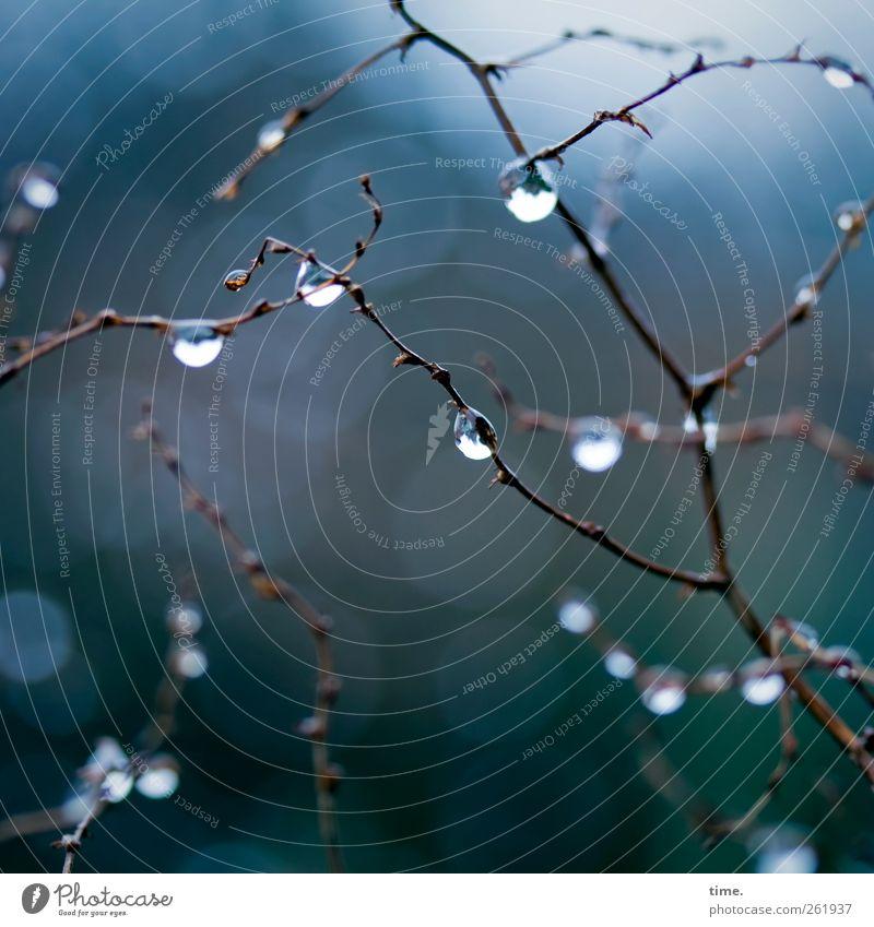 Frühjahrsperlen Natur blau grün Winter Umwelt kalt Garten Regen nass natürlich frisch Wassertropfen Vergänglichkeit Ast Flüssigkeit feucht
