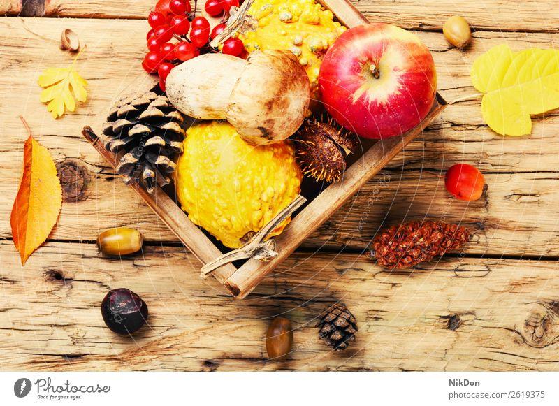 Herbstäpfel und Kürbisse Apfel fallen Hintergrund Lebensmittel organisch Saison Ernte Natur gelb natürlich Frucht orange Gesundheit Gemüse saisonbedingt