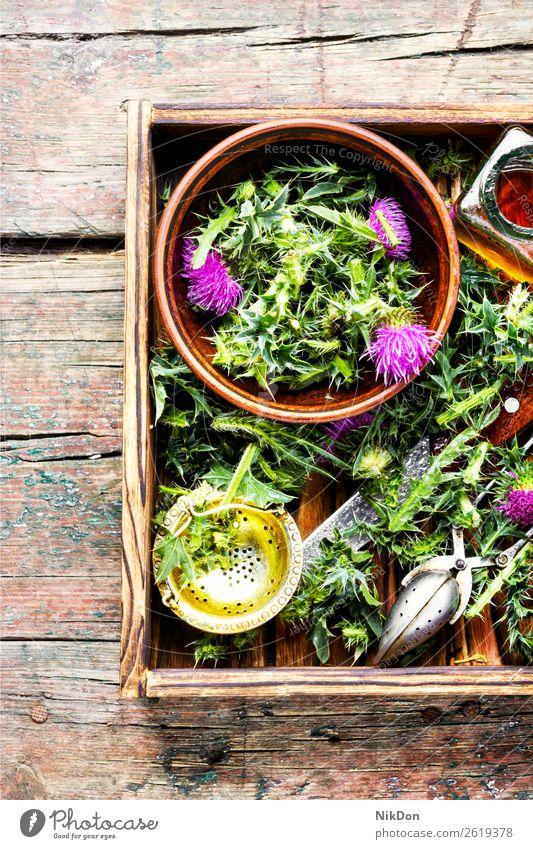 Onopordum und Kräuterkunde.Distel Stachelige Kratzdistel Pflanze Kraut Natur Kräuterbuch Medizin natürlich medizinisch Gesundheit Blüte Kräuterkundige