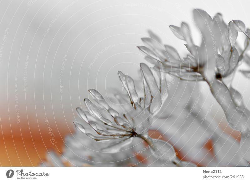 endlich *100* - eisblüte Natur Pflanze Urelemente Wasser Winter Klima schlechtes Wetter Eis Frost Gras Sträucher Blüte Nutzpflanze Wildpflanze Topfpflanze