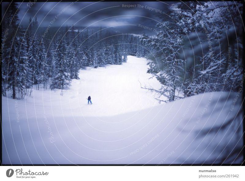 einsamabfahrt Mensch Natur Winter Wald Erholung dunkel Leben Schnee Sport Berge u. Gebirge Stimmung Eis Freizeit & Hobby Klima Lifestyle Frost