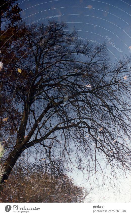 Schwimmbaum Umwelt Natur Landschaft Pflanze Himmel Wolkenloser Himmel Sonne Herbst Schönes Wetter Baum Wald Seeufer Teich wild chaotisch Einsamkeit