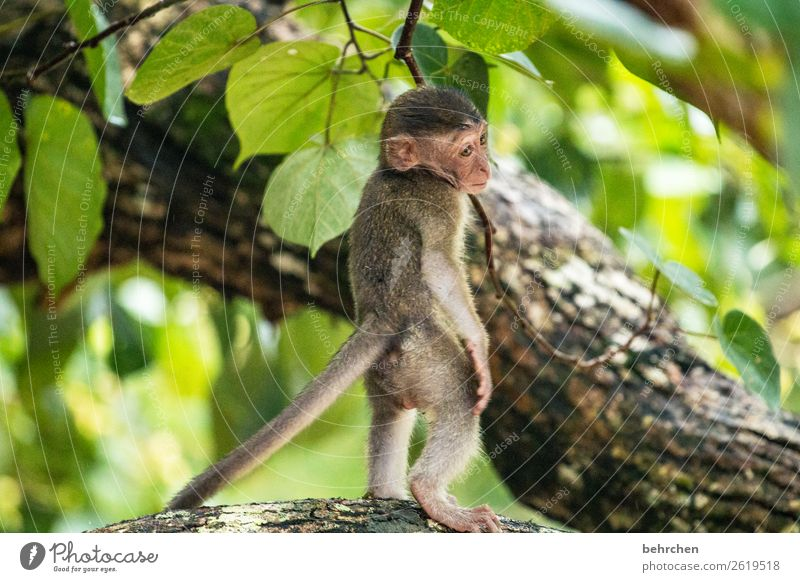 sich VERLASSEN fühlen Ferien & Urlaub & Reisen Tourismus Ausflug Abenteuer Ferne Freiheit Blume Urwald Wildtier Tiergesicht Fell Affen longtail makake 1