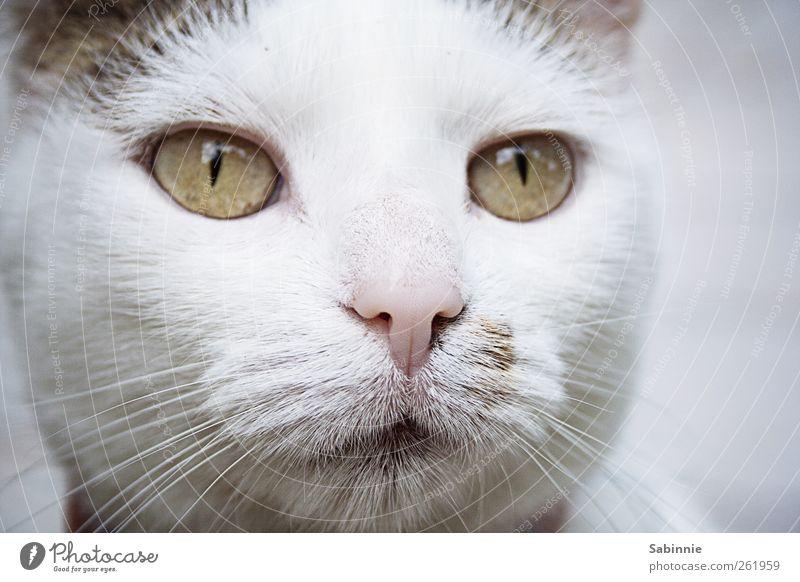 Beste Freundin Katze weiß grün Tier Liebe Auge Glück Zufriedenheit rosa Nase niedlich weich Neugier Fell Tiergesicht positiv