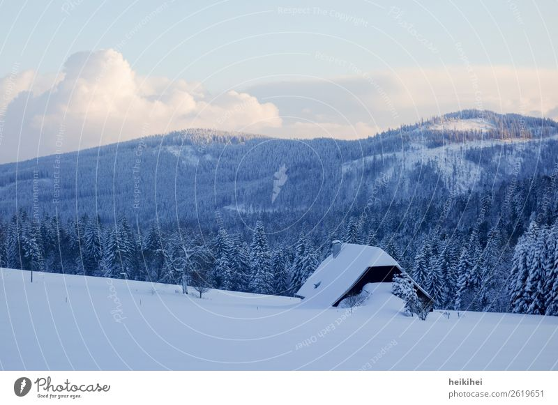Winteridylle im Schwarzwald Himmel Ferien & Urlaub & Reisen Natur Pflanze blau schön Landschaft weiß Sonne Baum Wolken Freude Wald Ferne Berge u. Gebirge