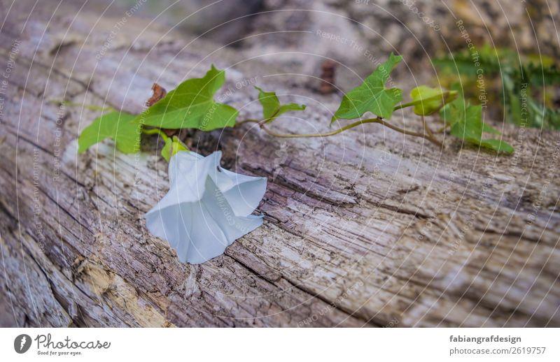 Weis & Grün Natur Pflanze Baum Blume Garten Park Wiese Feld Gefühle Zufriedenheit Glaube Religion & Glaube Hoffnung Farbfoto mehrfarbig Außenaufnahme
