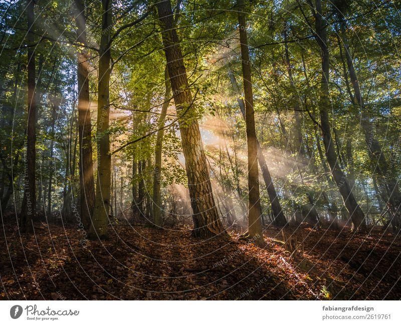 Morgensonne Umwelt Natur Landschaft Pflanze Erde Sonne Sonnenaufgang Sonnenuntergang Sonnenlicht Frühling Schönes Wetter Nebel Baum Gras Moos Blatt Grünpflanze