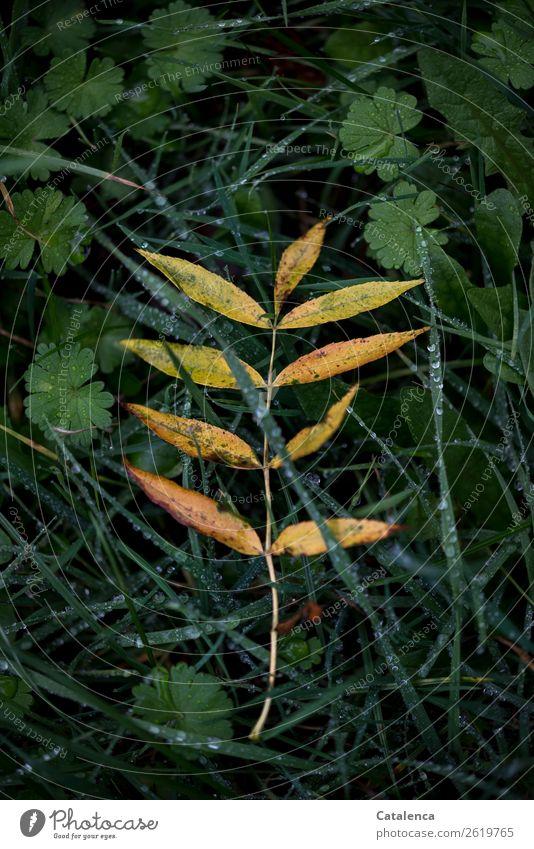Abschied Natur Pflanze schön grün Einsamkeit Blatt schwarz Herbst gelb natürlich Wiese Gras Garten orange Stimmung Regen