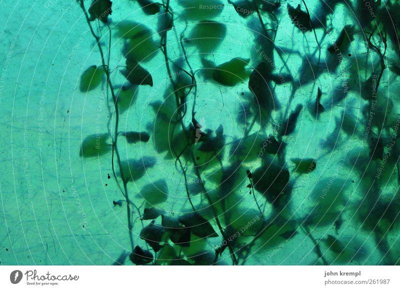 333 Blätter Natur Pflanze grün Blatt Leben Glück Wachstum leuchten Idylle ästhetisch Sträucher Wandel & Veränderung Hoffnung Kunststoff hängen trashig