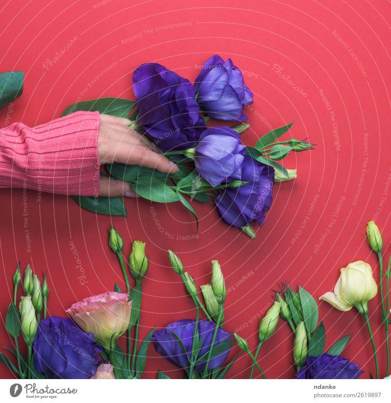 Frau Jugendliche blau schön grün rot Hand Blume Blatt 18-30 Jahre Erwachsene natürlich Stil Mode rosa oben