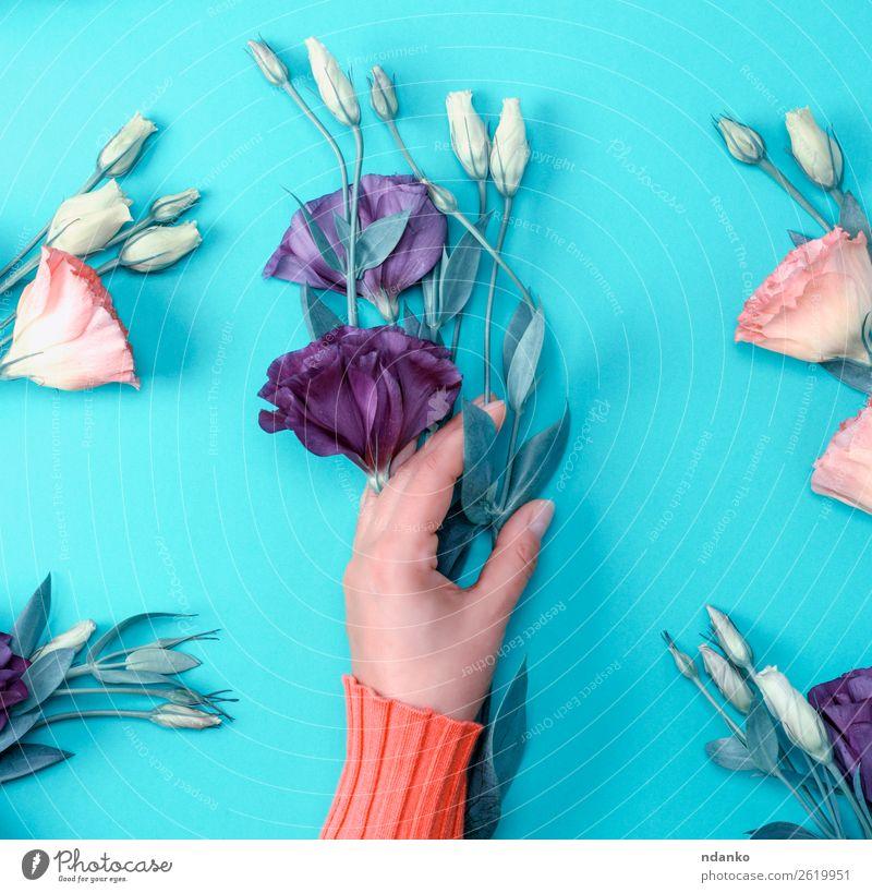 violette Blume Eustoma Lisianthus Stil Design schön Körper Haut Muttertag Frau Erwachsene Hand Natur Mode Blumenstrauß Blühend frisch natürlich oben weich grün