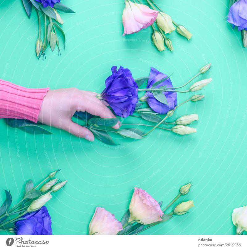 Blütenzweig Design Haut Feste & Feiern Valentinstag Muttertag Frau Erwachsene Hand 18-30 Jahre Jugendliche Blume Blatt Blumenstrauß berühren Blühend frisch