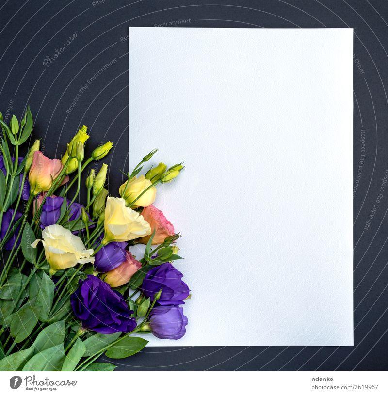 blau grün weiß Blume Blatt schwarz gelb Liebe natürlich Feste & Feiern Textfreiraum rosa frisch elegant Geburtstag Geschenk