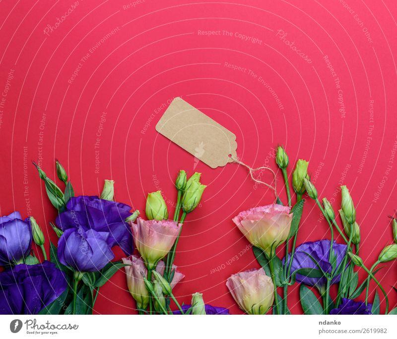 Blumen Eustoma Lisianthus Feste & Feiern Valentinstag Muttertag Blatt Blüte Papier Blumenstrauß Blühend frisch natürlich blau gelb grün rosa rot Idee Tag Sale