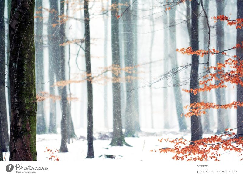 es rieselt leise im Wald Natur Landschaft Winter Nebel Schnee Schneefall Baum Zweige u. Äste Nebelwald Deutschland kalt schön weiß ruhig Winterstimmung