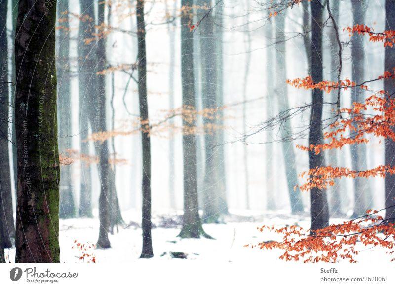 es rieselt leise im Wald Winterwald Schnee Winterstille weiße Weihnachten Stille nordische Romantik Ruhe Winternebel Wintereinbruch Nebelwald Schneefall ruhig