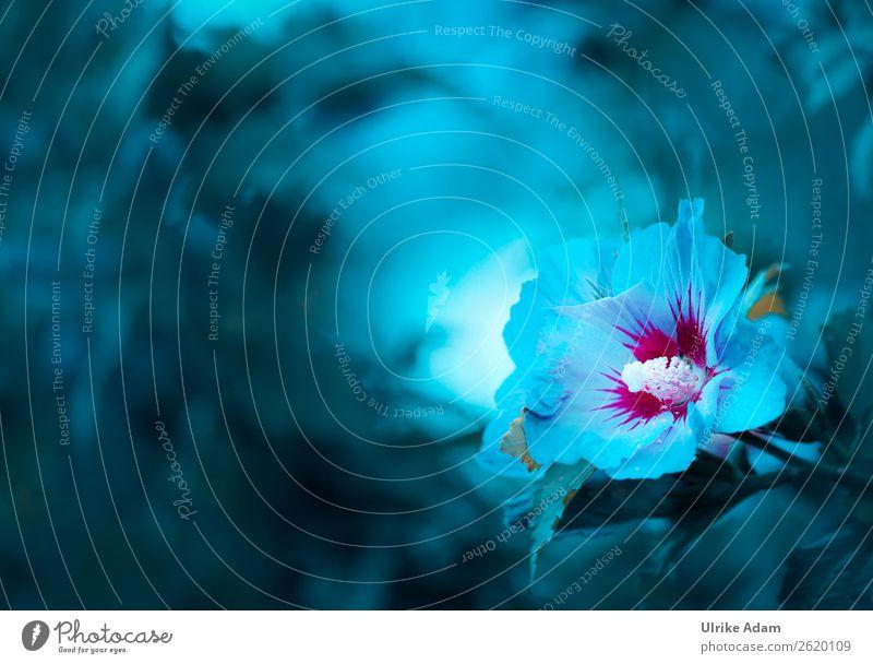 Hibiskus Natur Sommer Pflanze blau Farbe Blume Erholung Leben Blüte natürlich Stil Design Geburtstag Blühend Hochzeit weich