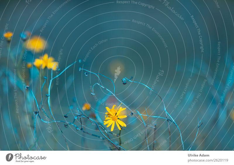 Blumenwiese Natur Sommer Pflanze blau Erholung Herbst gelb Blüte Frühling Wiese Feste & Feiern Design Zufriedenheit Dekoration & Verzierung Feld