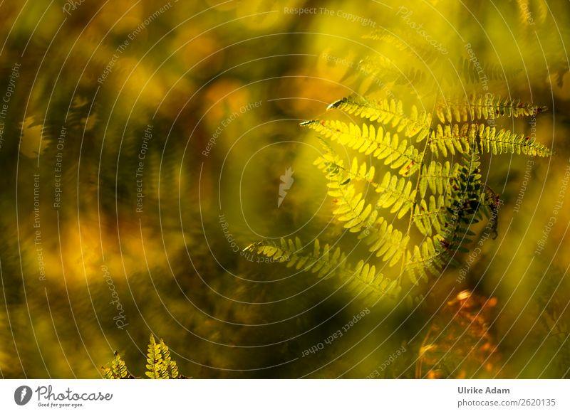 Farn im Licht - Natur Wellness Leben harmonisch Wohlgefühl Erholung ruhig Meditation Kur Spa Tapete Trauerkarte Trauerfeier Beerdigung Pflanze Sommer Herbst