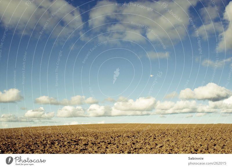 Endlos Himmel Natur blau weiß Wolken gelb Umwelt Freiheit braun Erde Wetter Feld wild Klima frei Urelemente