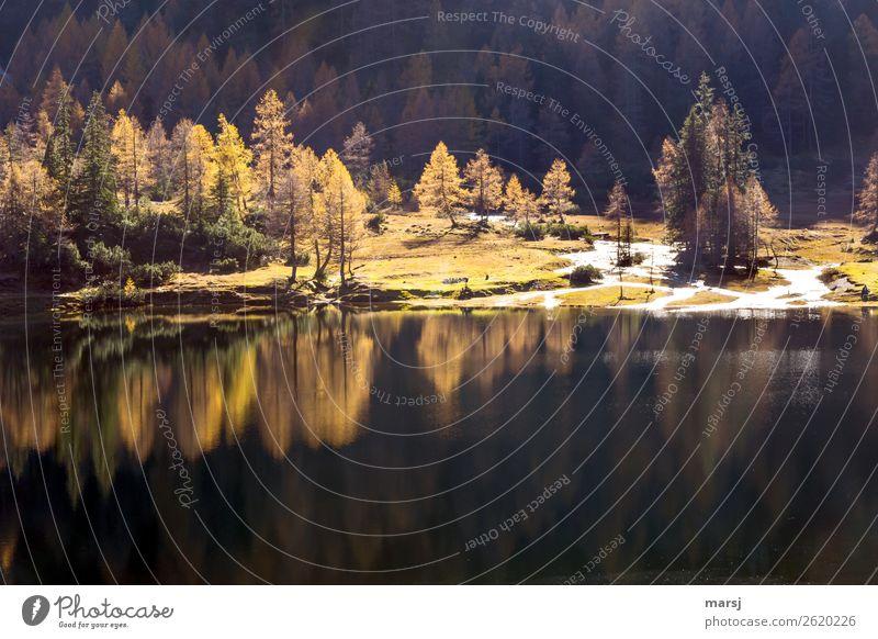 Gespiegelt im Bergsee Ferien & Urlaub & Reisen Natur Landschaft Erholung ruhig Wald Leben Herbst gelb Tourismus außergewöhnlich See Ausflug Zufriedenheit
