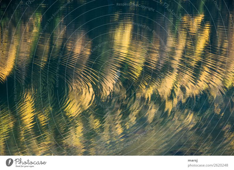 Der Herbst zieht seine Kreise Pflanze Wasser ruhig Leben gelb Traurigkeit Zusammensein leuchten träumen gold Wellen authentisch Schönes Wetter fantastisch