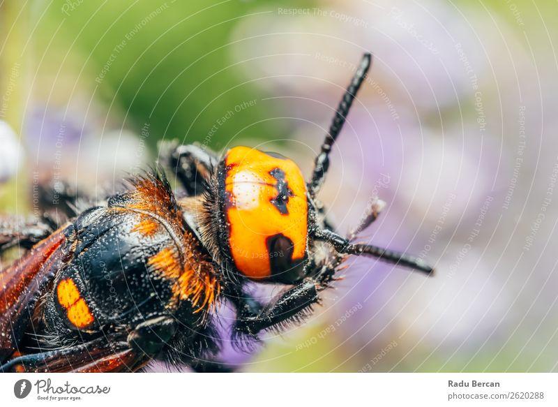 Natur Sommer Blume Tier Blatt schwarz gelb Umwelt natürlich Garten orange wild Wildtier groß Asien Insekt