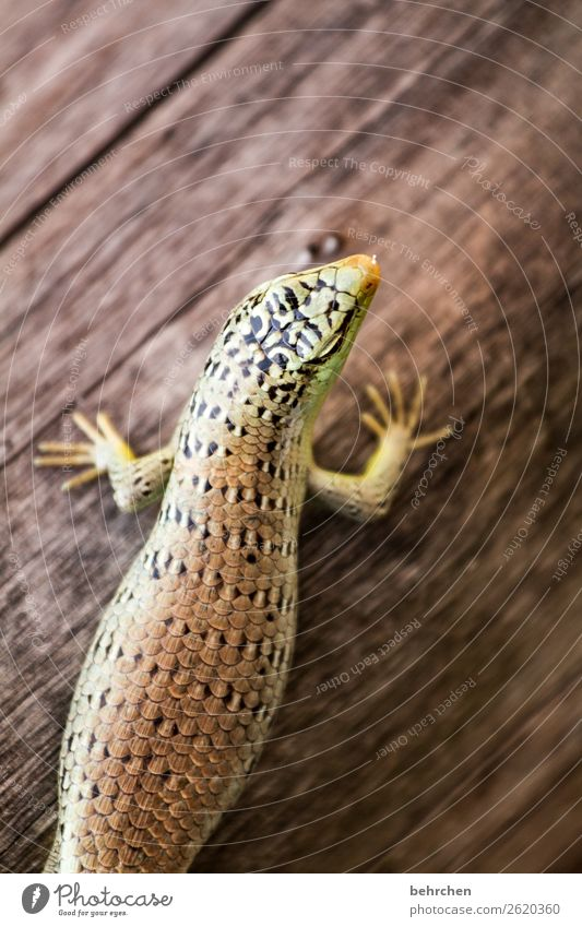 ein bisschen rund um die mitte Ferien & Urlaub & Reisen schön Tier Ferne Holz Tourismus außergewöhnlich Freiheit Ausflug Wildtier Abenteuer fantastisch