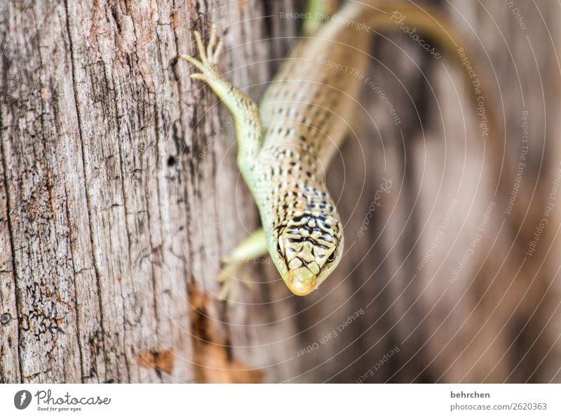 fingerspitzengefühl | zum festhalten Ferien & Urlaub & Reisen Tourismus Ausflug Abenteuer Ferne Freiheit Baum Wildtier Tiergesicht Schuppen Gecko