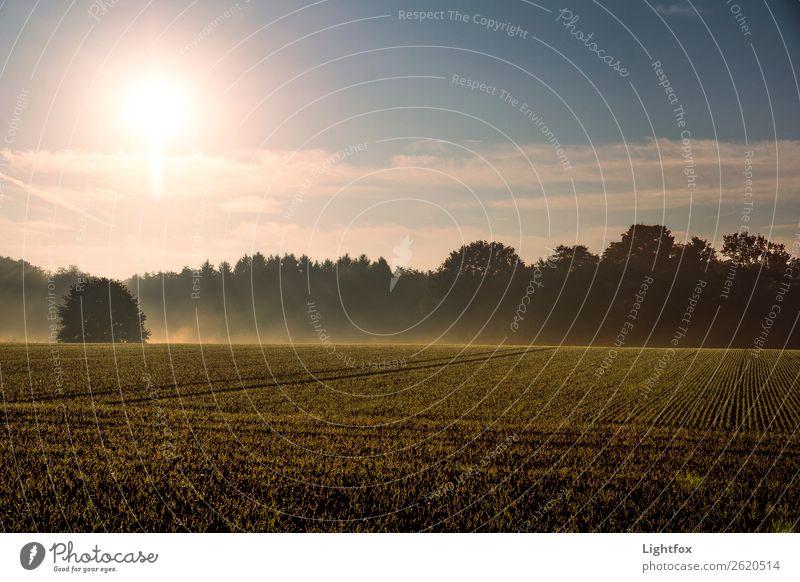 Guten Morgääääähn Umwelt Natur Landschaft Erde Sand Luft Himmel Horizont Sonnenaufgang Sonnenuntergang Sonnenlicht Klima Klimawandel Wetter Wind Pflanze Baum