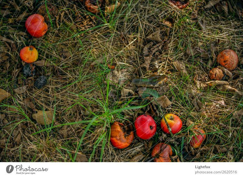 Fallobstwiese Ernährung Pflanze Baum Verantwortung Hoffnung Trauer Tod bedrohlich geheimnisvoll nachhaltig Natur schön Verfall Vergangenheit Vergänglichkeit