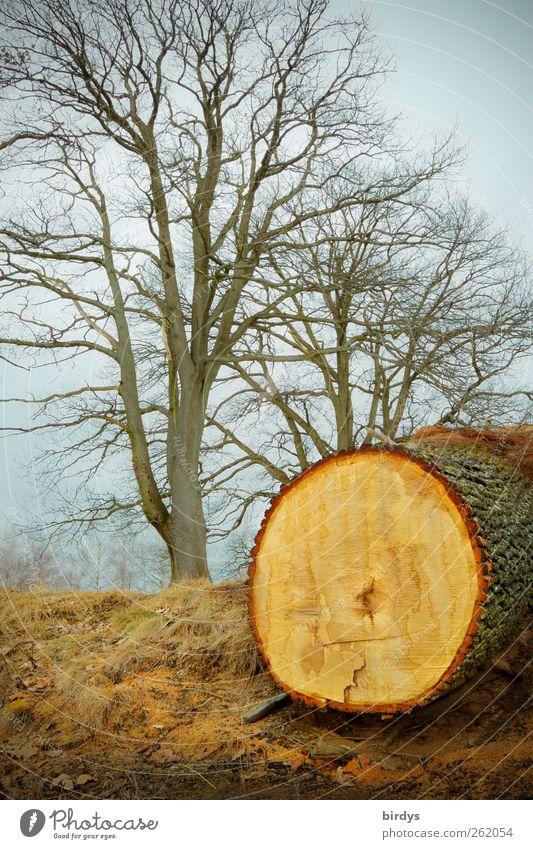 Die Lebenden und die Toten Natur Wolken Herbst Winter Baum Park außergewöhnlich Ungerechtigkeit Umweltschutz Wandel & Veränderung Zerstörung gefällter Baum