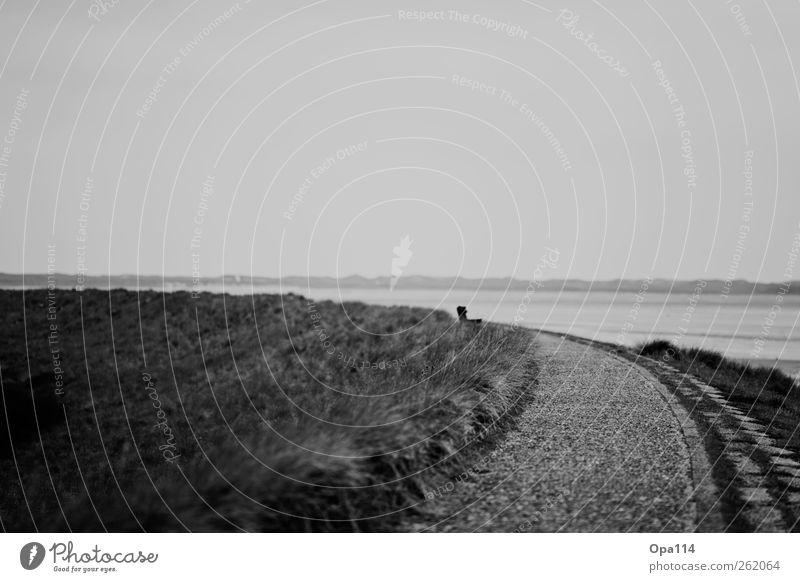 Road to nowhere... Natur weiß Pflanze Sommer Meer Tier schwarz Umwelt Landschaft kalt Gras Küste gehen laufen wandern Insel