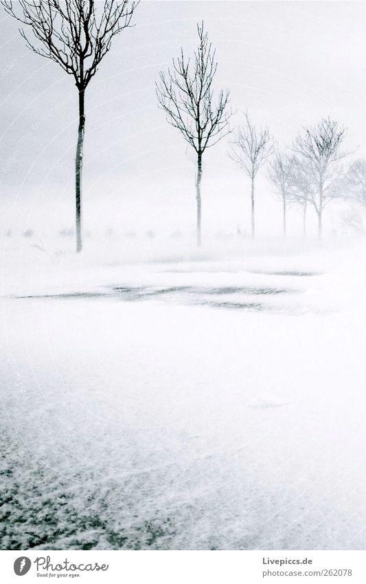 Schneesturm Umwelt Natur Landschaft Winter schlechtes Wetter Unwetter Wind Sturm Eis Frost Schneefall Pflanze Baum Straße grau schwarz weiß Schwarzweißfoto