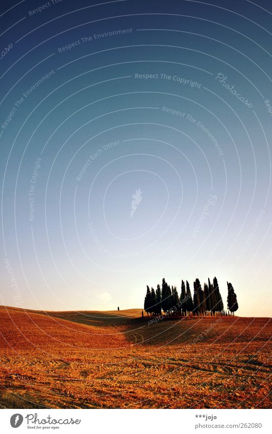 klassisches kalendermotiv. Natur Baum Ferien & Urlaub & Reisen Sommer Wald Ferne Landschaft Wärme Erde Feld ästhetisch Hügel Idylle Italien Landwirtschaft