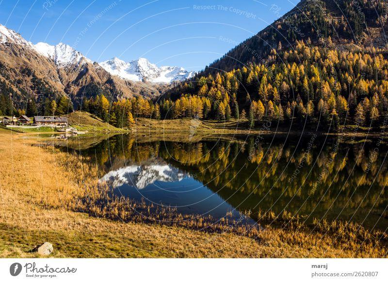 Herbst am Duisitzkarsee ruhig Ferien & Urlaub & Reisen Tourismus Ausflug Berge u. Gebirge wandern Natur Lärche Wald Alpen Schneebedeckte Gipfel See Gebirgssee