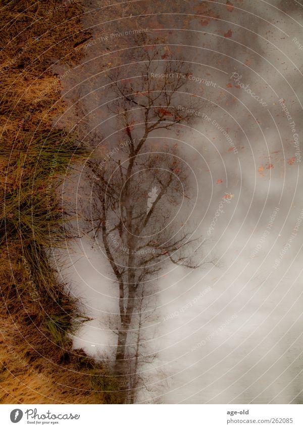 Baum Wasser Himmel Winter schlechtes Wetter Eis Frost Gras See träumen nass blau braun grau grün Gelassenheit ruhig Endzeitstimmung Farbfoto Außenaufnahme