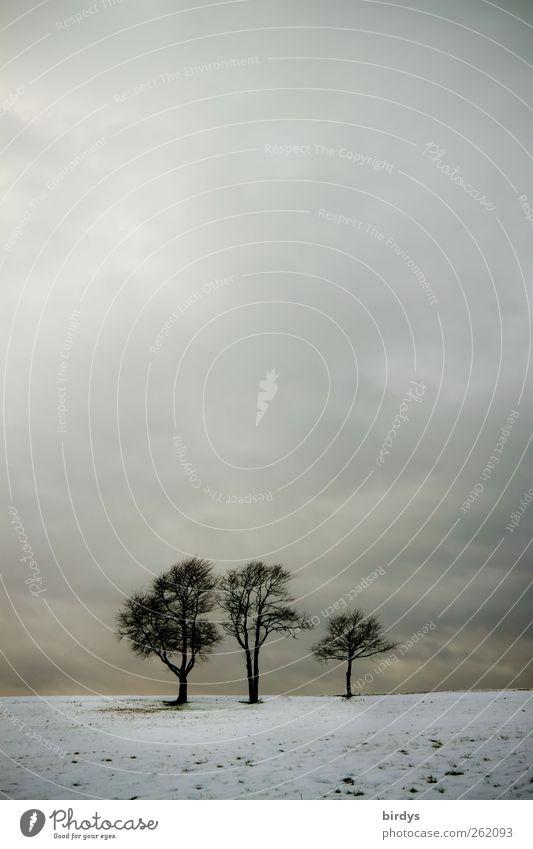 Kleinfamilie Natur Baum Wolken ruhig Winter Landschaft Umwelt Horizont natürlich Wetter Feld Idylle ästhetisch Romantik Kitsch positiv