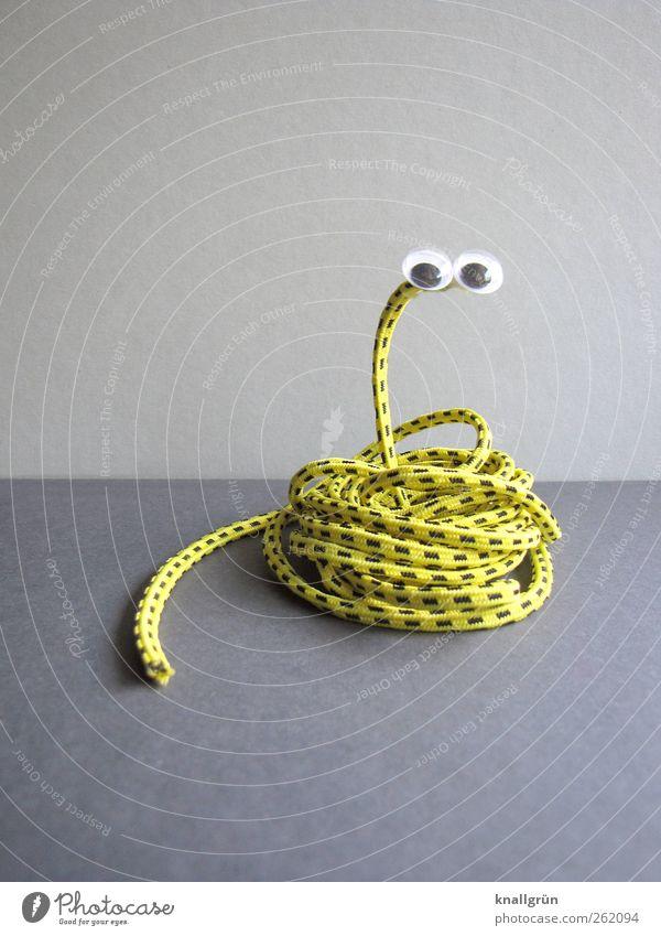Kringelnatter Tier Schlange 1 beobachten lustig rund gelb grau schwarz Freude Gummiband gestreift Auge kulleräugig Basteln aufgewickelt Farbfoto Studioaufnahme