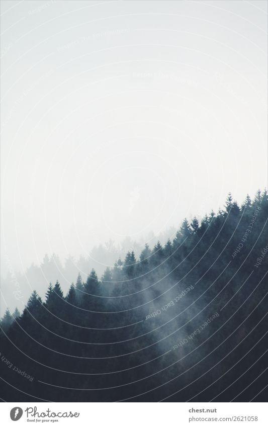 Berg und Bäume im Nebel Gesundheit Leben harmonisch Zufriedenheit Sinnesorgane Erholung Ferne Freiheit Berge u. Gebirge wandern Klettern Bergsteigen Natur