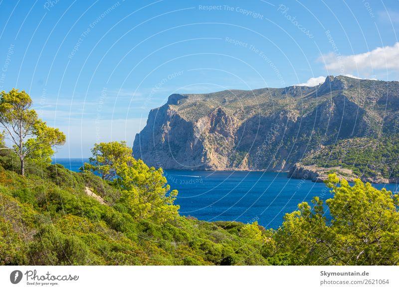 Blick zur Steilküste von Mallorca Ferien & Urlaub & Reisen Natur Pflanze Landschaft Baum Meer Erholung Tier Umwelt Küste Felsen Sträucher entdecken Bucht