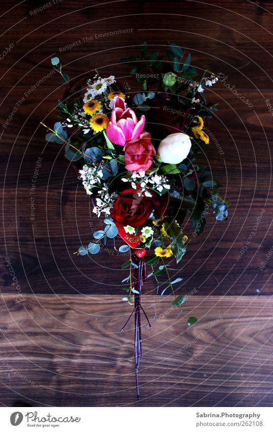Valentinstag 2.0 grün schön rot Blume Liebe feminin Glück elegant glänzend Dekoration & Verzierung Sträucher Romantik genießen Verliebtheit exotisch Treue